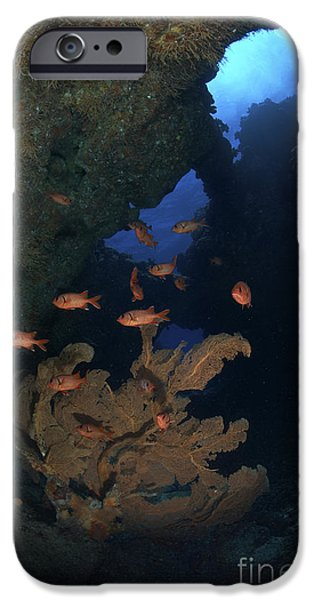 Water In Caves iPhone Cases - Red Bigeye Fish And Sea Fan In An iPhone Case by Mathieu Meur