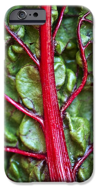 Swiss Chard iPhone Cases - Red Chard Leaf iPhone Case by Ray Laskowitz - Printscapes