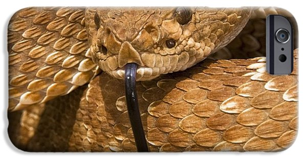 Serpent iPhone Cases - Red-diamond Rattlesnakecrotalus Ruber iPhone Case by Jack Goldfarb