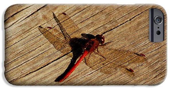 Nature Center Pond iPhone Cases - Red Dragon Fly iPhone Case by LeeAnn McLaneGoetz McLaneGoetzStudioLLCcom