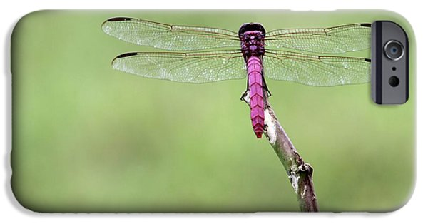 Preditor iPhone Cases - Red Dragonfly Dancer iPhone Case by Sabrina L Ryan