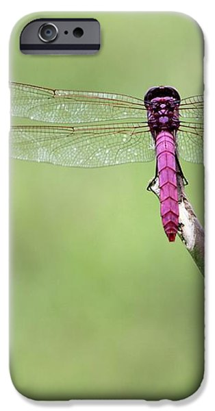 Red Dragonfly Dancer iPhone Case by Sabrina L Ryan