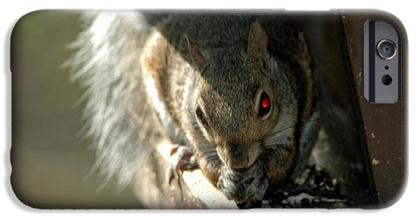 Nature Center Pond iPhone Cases - Red Eyed Demon Squirrel iPhone Case by LeeAnn McLaneGoetz McLaneGoetzStudioLLCcom