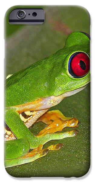Red-eyed Leaf Frog iPhone Case by Tony Beck