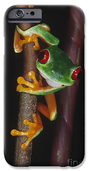 Red-eyed Tree Frog Agalychnis Callidryas iPhone Case by Gregory G. Dimijian, M.D.