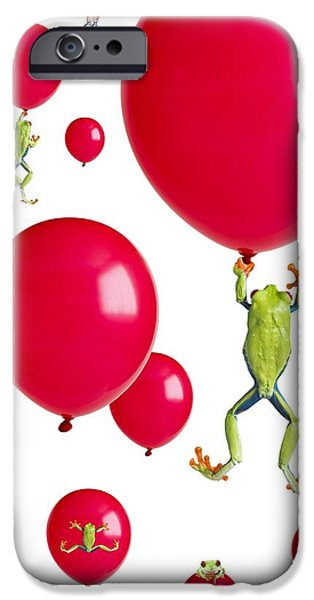 Flying Frog iPhone Cases - Red-eyed Treefrogs Floating On Red iPhone Case by Corey Hochachka