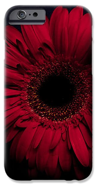 Red Flower iPhone Case by Ron Smith