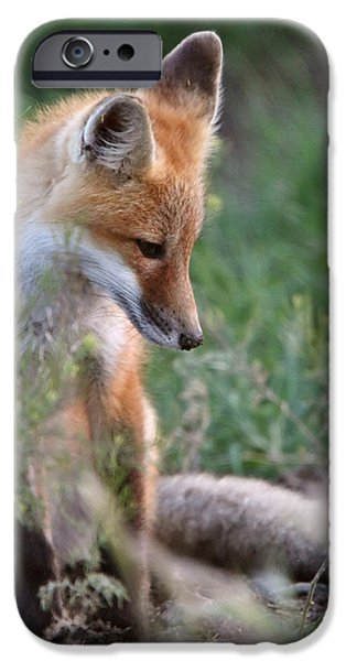 Pups Digital Art iPhone Cases - Red Fox pup outside its den iPhone Case by Mark Duffy