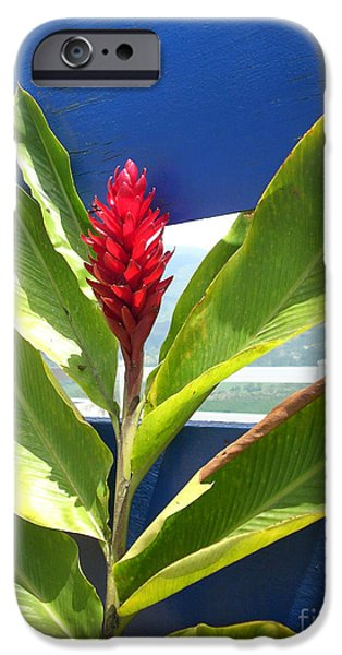 Red Ginger iPhone Case by Randi Shenkman