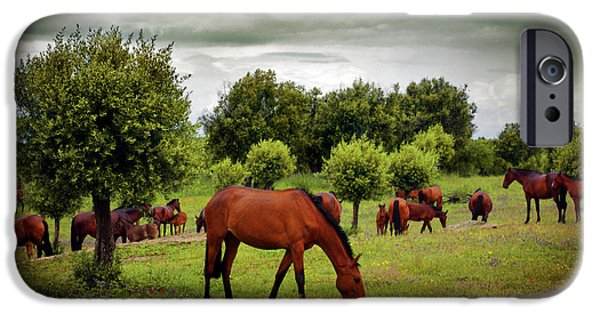 Agriculture iPhone Cases - Red Horses iPhone Case by Carlos Caetano