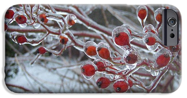 Winter Storm iPhone Cases - Red Ice Berries iPhone Case by Kristine Nora