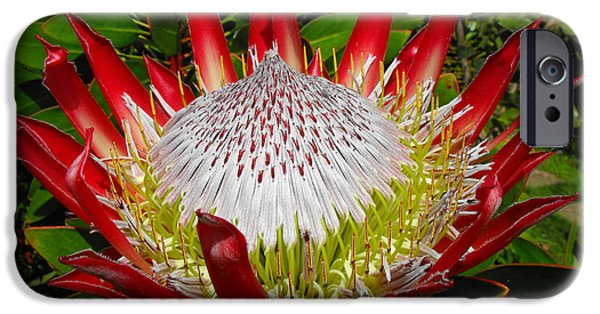 Recently Sold -  - Floral Photographs iPhone Cases - Red King Protea iPhone Case by Rebecca Margraf