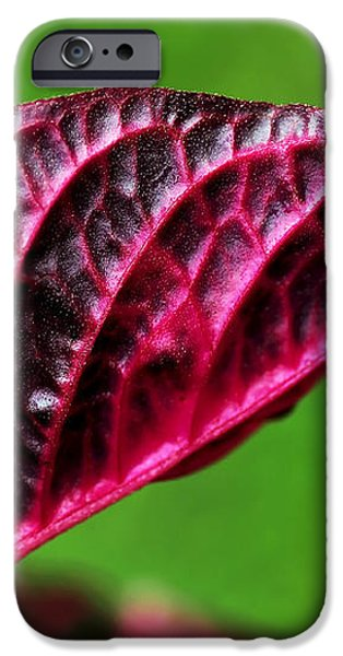 Red Leaf iPhone Case by Kaye Menner