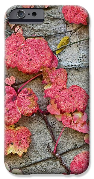 Red Leaves iPhone Case by Scott Norris