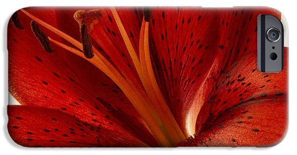 Asiatic Lily iPhone Cases - Red Lily Number Two iPhone Case by Bill Swindaman