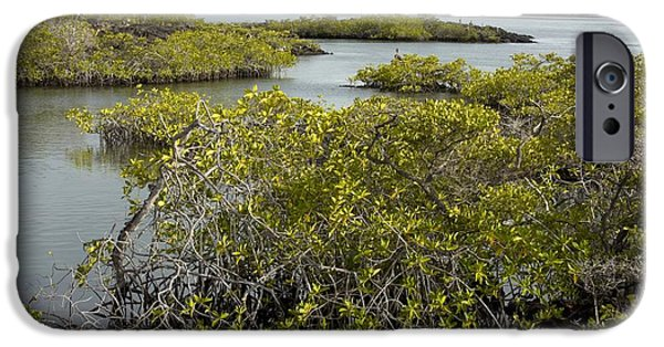 Rhizophora Mangle iPhone Cases - Red Mangroves (rhizophora Mangle) iPhone Case by Bob Gibbons