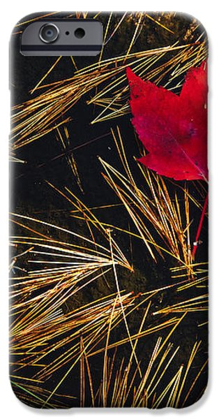 Red Maple Leaf On Pine Needles In Pool iPhone Case by Mike Grandmailson