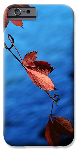 Red maple leaves iPhone Case by Paul Ge