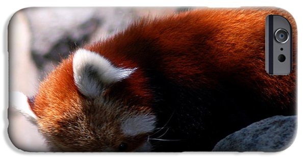Smithsonian iPhone Cases - Red Panda Lost Keys iPhone Case by LeeAnn McLaneGoetz McLaneGoetzStudioLLCcom