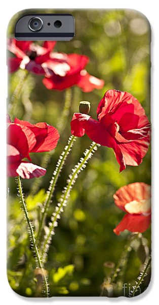 Botanical Photographs iPhone Cases - Red poppies iPhone Case by Elena Elisseeva