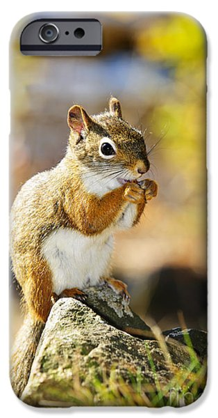 Friendly iPhone Cases - Red squirrel iPhone Case by Elena Elisseeva