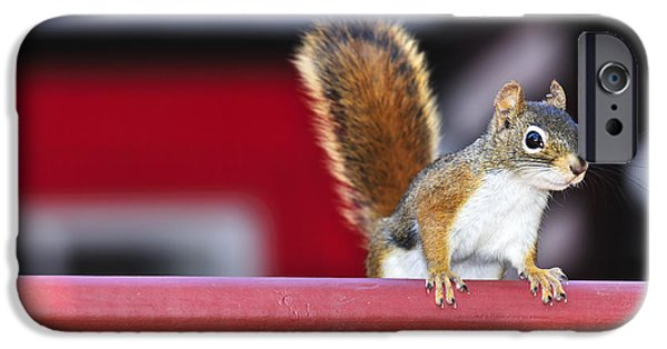 Bushy Tail iPhone Cases - Red squirrel on railing iPhone Case by Elena Elisseeva