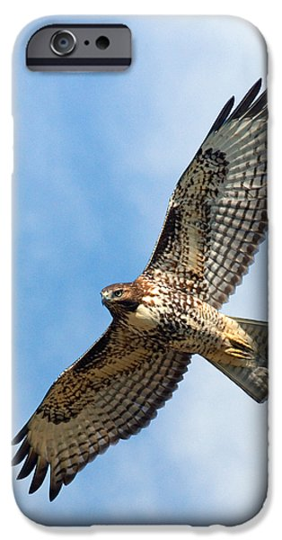 Red Tail Hawks iPhone Cases - Red Tail Hawk iPhone Case by Randall Ingalls