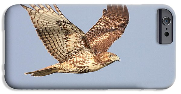 Red Tail Hawks iPhone Cases - Red Tailed Hawk 20100101-1 iPhone Case by Wingsdomain Art and Photography