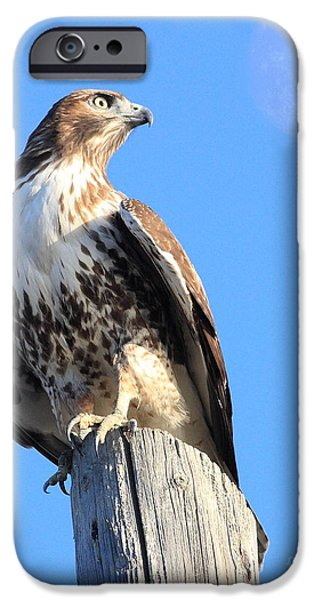 Red Tail Hawks iPhone Cases - Red Tailed Hawk and Moon iPhone Case by Wingsdomain Art and Photography