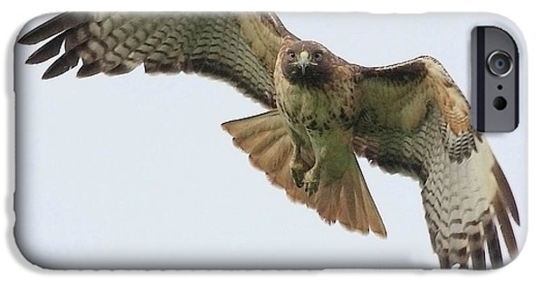 Red-tailed Hawk iPhone Cases - Red Tailed Hawk Finds Its Prey iPhone Case by Wingsdomain Art and Photography
