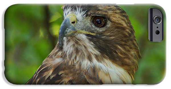 Hawk Art iPhone Cases - Red-tailed Hawk III iPhone Case by Sandy Keeton