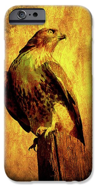 Red Tail Hawks iPhone Cases - Red Tailed Hawk . texture . 40D10167 iPhone Case by Wingsdomain Art and Photography
