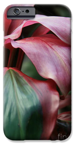 Abstracts From Nature iPhone Cases - Red Ti - Cordyline terminalis iPhone Case by Sharon Mau