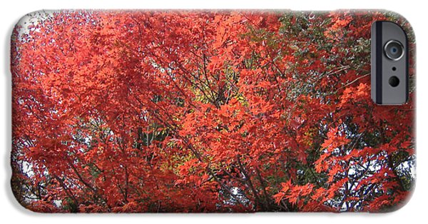 Buddhist Photographs iPhone Cases - Red Tree iPhone Case by Naxart Studio