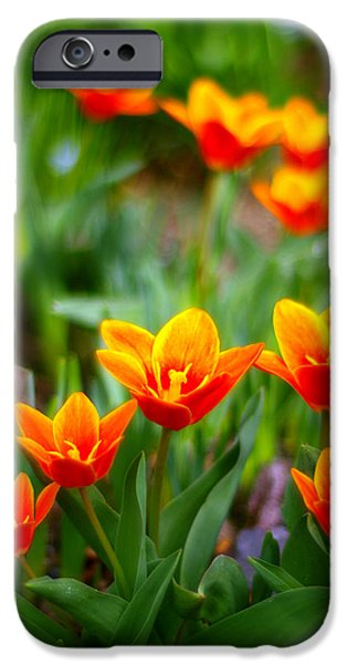 Red Tulips iPhone Case by Paul Ge