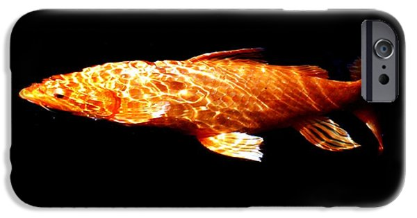 Butterfly Koi Photographs iPhone Cases - Reflected ripples iPhone Case by Don Mann