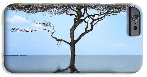Reflection Of Trees iPhone Cases - Reflecting iPhone Case by Cheryl Young