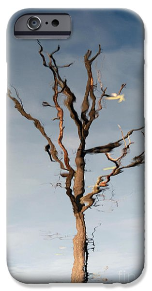 Reflection Of Trees iPhone Cases - Reflections of a Tree iPhone Case by Paul Ward