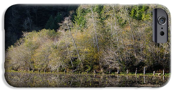 Autumn Leaf On Water iPhone Cases - Reflections on Marshall Pond iPhone Case by Greg Nyquist