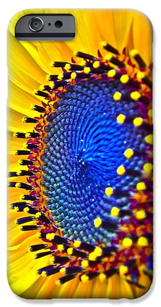 Sunflower Photograph iPhone Cases - Rejoice iPhone Case by Gwyn Newcombe