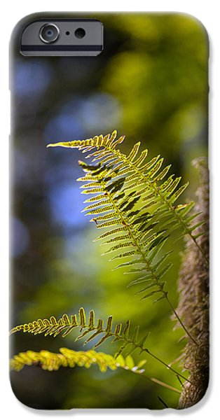 Renewal Ferns iPhone Case by Mike Reid
