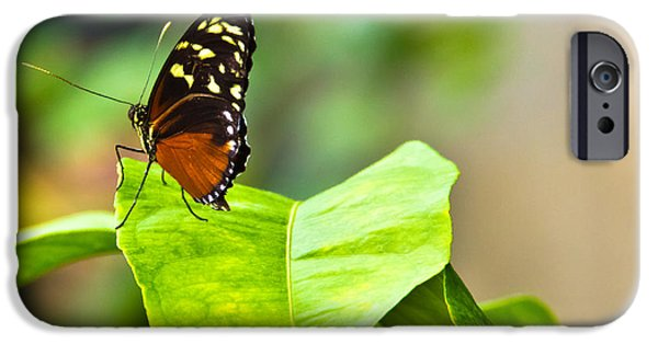 Flight Pyrography iPhone Cases - Resting On A Petal iPhone Case by Darren Langlois