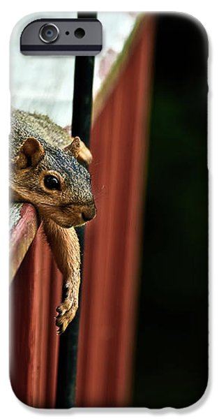 Resting Squirrel iPhone Case by  onyonet  photo studios