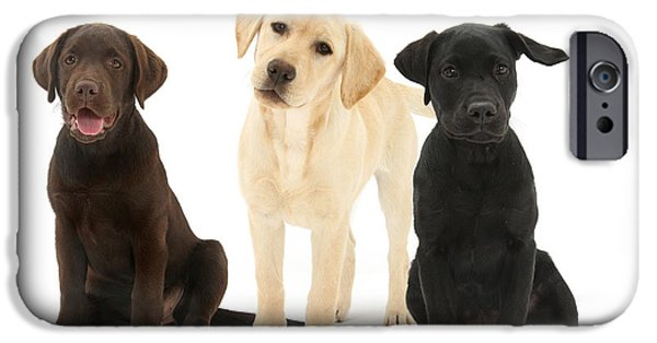 Chocolate Lab iPhone Cases - Retriever Pups Of Every Color iPhone Case by Mark Taylor