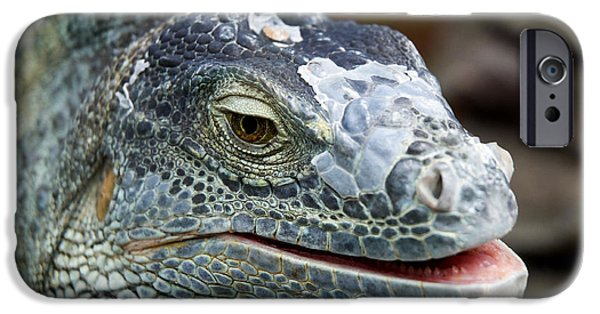 Iguana iPhone Cases - Rhinoceros Iguana iPhone Case by Fabrizio Troiani
