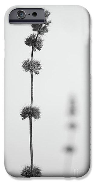 Rhythm iPhone Case by Gabriela Insuratelu
