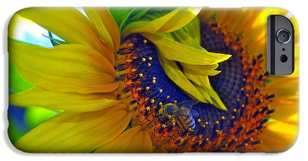 Sunflowers Photographs iPhone Cases - Rich in Pollen iPhone Case by Gwyn Newcombe