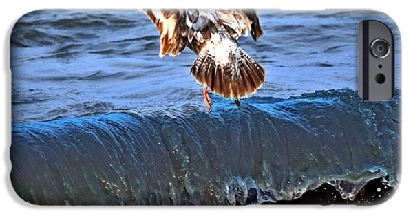 Seagull iPhone Cases - Riding The Wave  iPhone Case by Debra  Miller