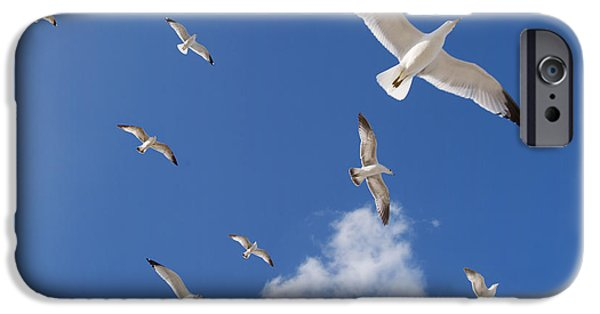 Flying Seagull iPhone Cases - Ring Billed Gulls Overhead iPhone Case by Patrick M Lynch