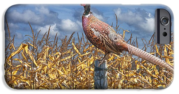 Gamebird iPhone Cases - Ringneck Pheasant iPhone Case by Randall Nyhof